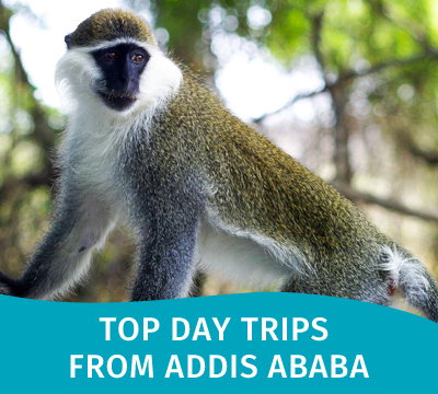 Top Day Trips from Addis Ababa